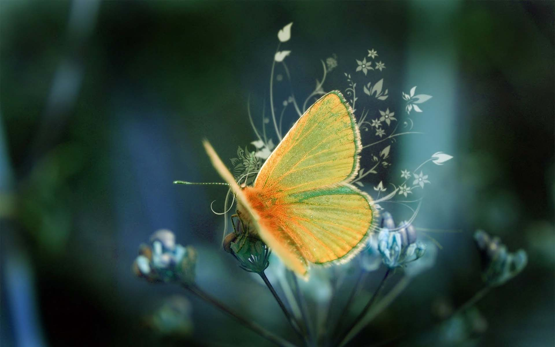 butterfly beautiful wallpaper | photochill