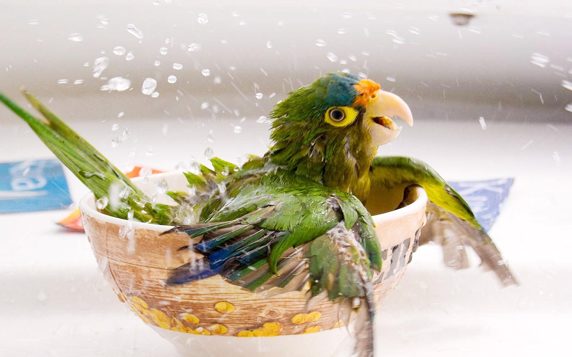 رومانسية cute-bird-wallpapers