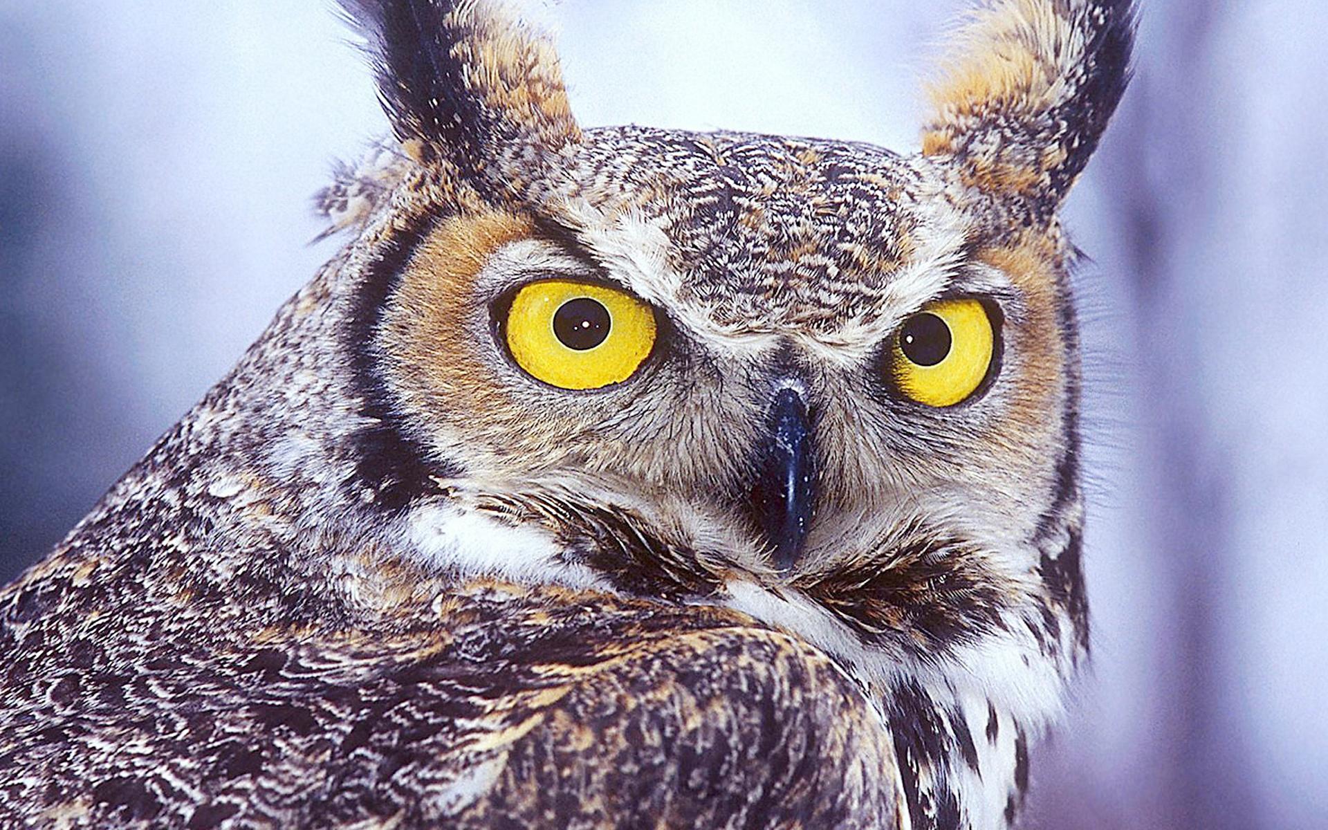 8k Animal Wallpaper Download: Beautiful Animals Wallpapers HD Desktop Widescreen Free